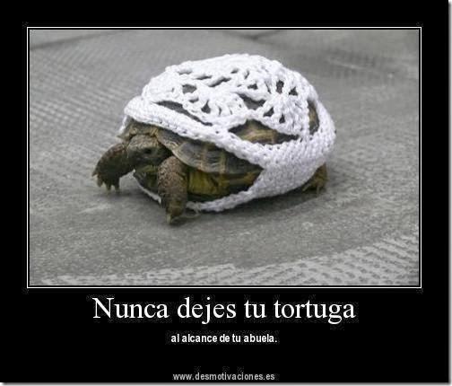 humor tortugas (47)