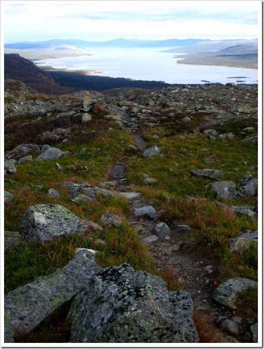 Här någonstans hade jag gått 7 km från Pårtestugan men inte en glimt av något vindskydd som skulle ligga här. Deras avståndsskyltar är då inte att lite på.