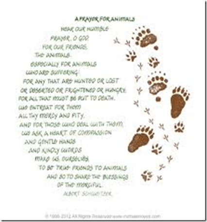 imagesCACB0KLX prayer for animals