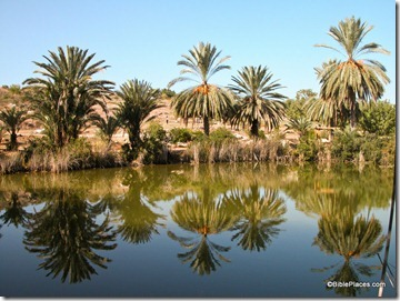 Pool with date palms, Neot Kedumim, tb112103295
