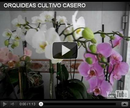 Curso de jardiner a dise o y decoracion de jardines de casas - Jardineria en casa ...
