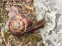 Snail\'s pace.