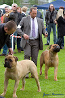 20100513-Bullmastiff-Clubmatch_31170.jpg