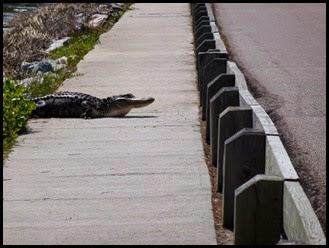 03a2 - Causeway- Gator crossing - rest