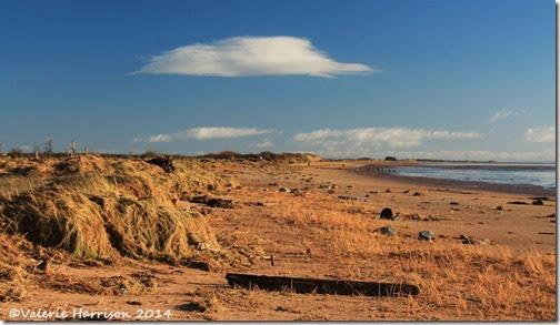 33-damaged-dunes
