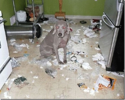funny-cats-dogs-destroy-house-001