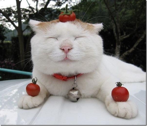 Gatos Felizes (26)