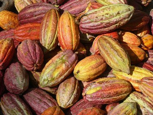 Cacaos Hacienda San Jose