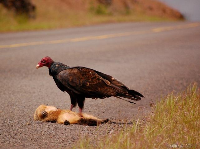 Vulture5