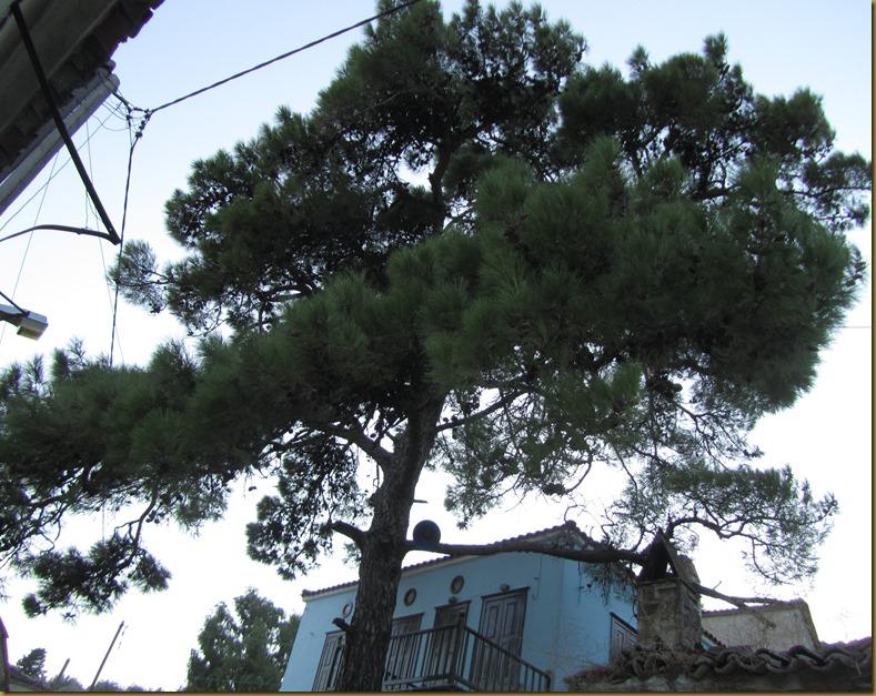 ΠΑΛΑΙΟΧΩΡΙ-ΠΕΥΚΟΣ ΛΑΓΚΑΔΟΥΡΑΣ 1