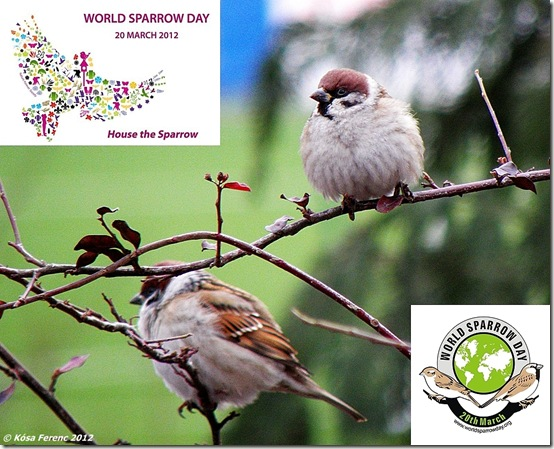 World_Sparrow_Day_2012_03_20b
