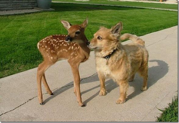 funny-animals-cute-47