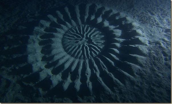 Crop Circles sous-marins (4)