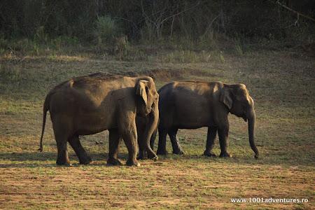 Vacanta India: Elefanti in rezervatia Periyar.