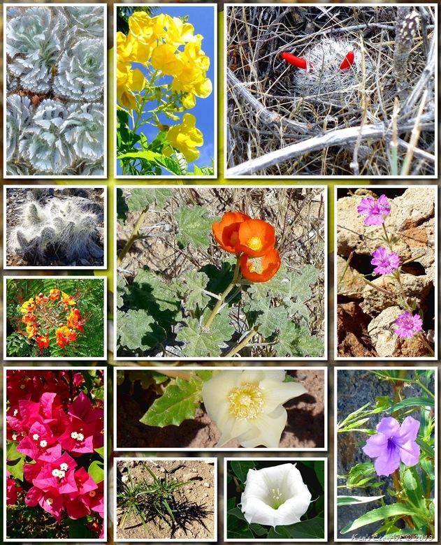 2012 Flowers 02