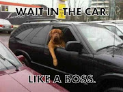 funny happy birthday quotes for boss. Wait In The Car Like A Boss. 9 ...