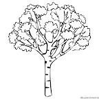 Dibujos dia del arbol (1).png