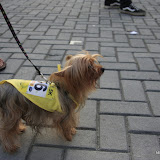 Pet Express Doggie Run 2012 Philippines. Jpg (249).JPG