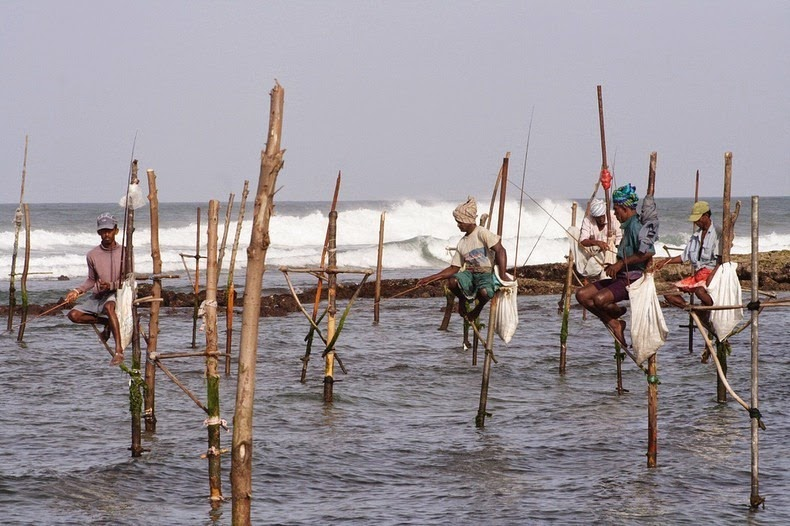 stilt-fishermen-sri-lanka-9