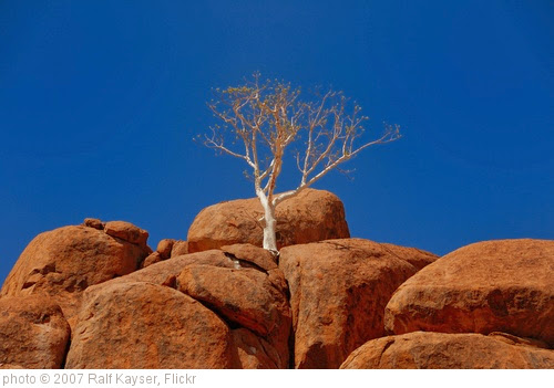 'tree on the rocks' photo (c) 2007, Ralf Kayser - license: https://creativecommons.org/licenses/by/2.0/