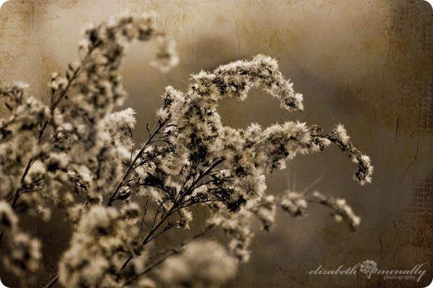 seedheadsmeadowlark