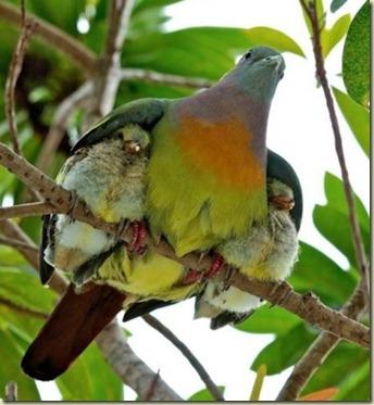 mama bird.bmp