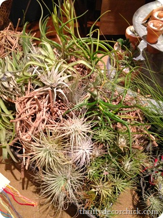air plants