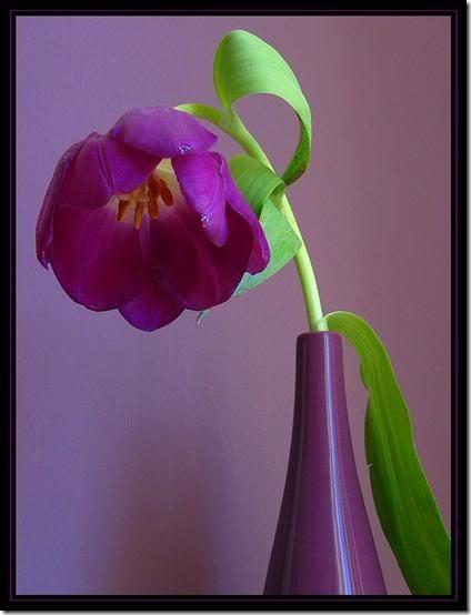 flor día del amor (26)