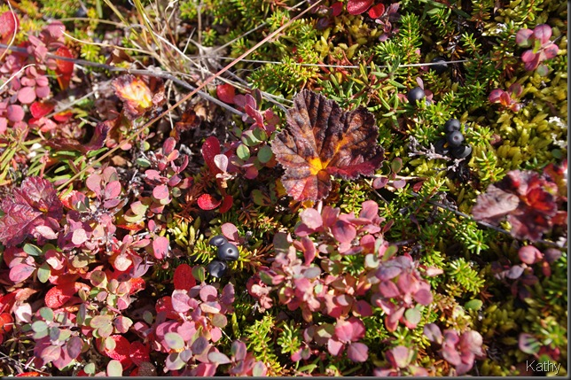 Crowberries, Blue Berries and Cloud Berries