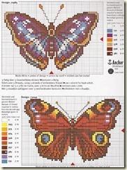 borboleta6[1]