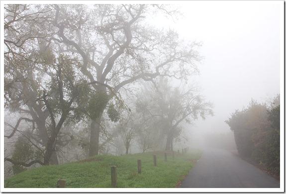 111220_fog_greenbelt3