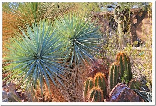 131203_TucsonBotanicalGarden_081