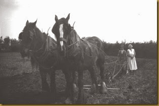 120 Tom Maud ploughing with Darby Stout on Offas Dyke