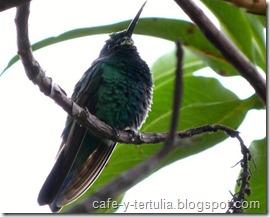 colibri, fauna parque entre nubes