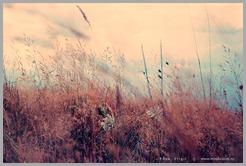 Nature_by_PopiX