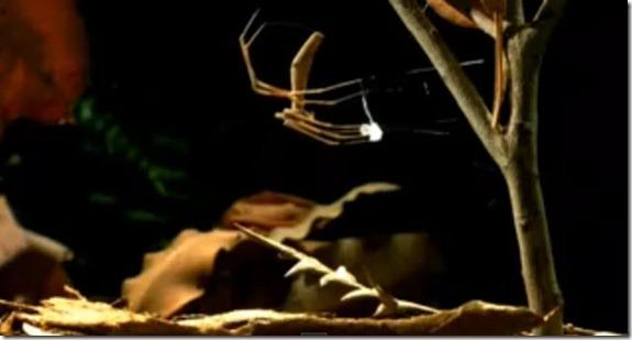 araña aracnido cazador