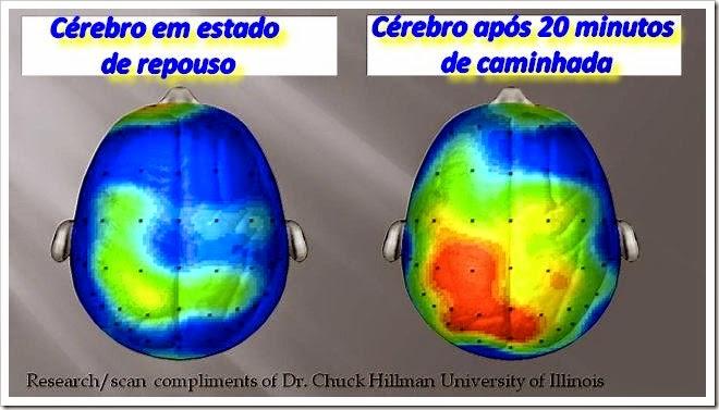cérebro perfeito