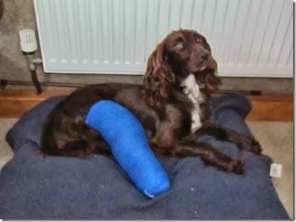 broken leg 030