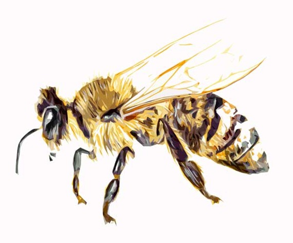 honey-bee-copy-plain-after-