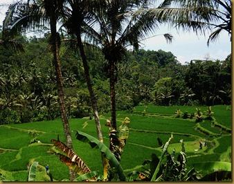Bali D2 052