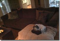 Mattie on couch