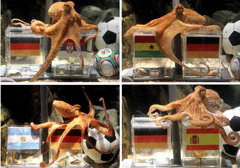 Octopus Paul: The FIFA World Cup 2010 hero
