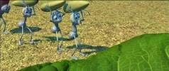 01 les fourmis