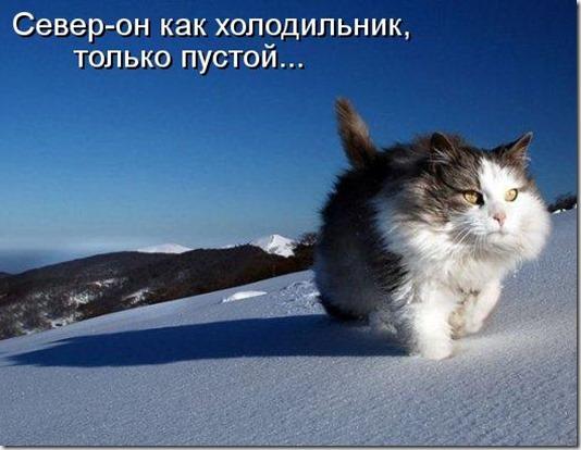 kotomatritsa_B