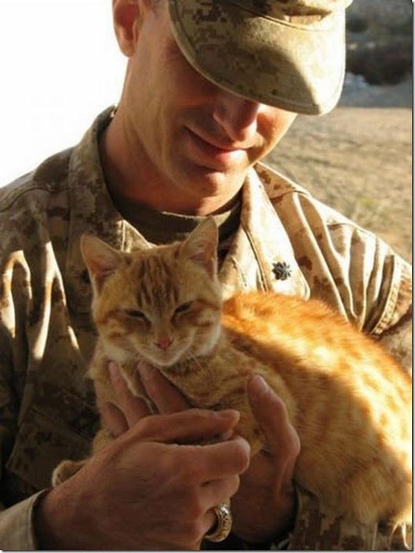Soldados e animais de estimação (4)