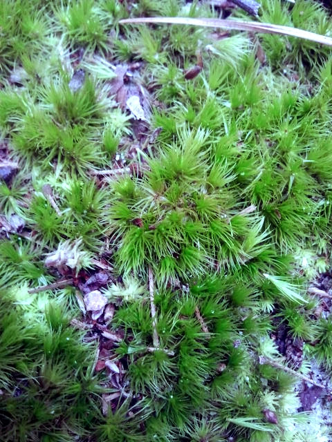 moss detail first landing state park virginia beach