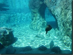 Fresno Zoo 021