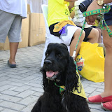 Pet Express Doggie Run 2012 Philippines. Jpg (248).JPG