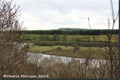 34-Cree-view