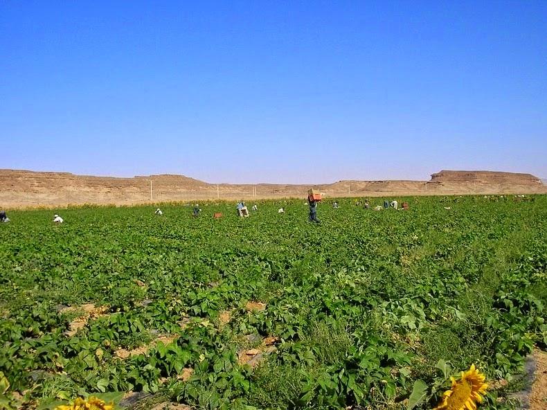 wadi-rum-farming-4